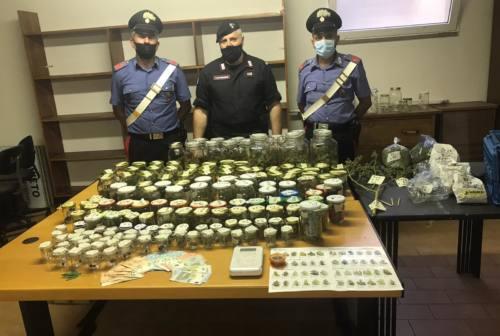 Tavullia, tra reti scure e pomodori il campo di marijuana. Arrestato 38enne