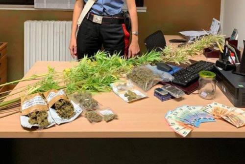 Acquista 80 grammi di marijuana in Romagna, 21enne pesarese denunciato