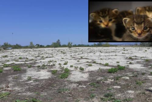 Jesi, al via i lavori della nuova oasi felina a Mazzangrugno