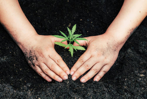 Cannabis light stupefacente? Il passo indietro del ministro Speranza