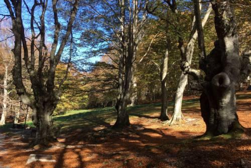 Lo spettacolo del foliage in autunno: ecco dove vederlo nelle Marche