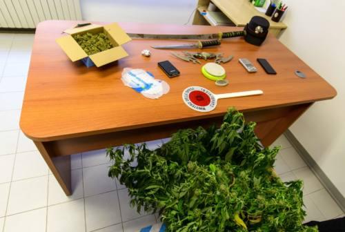 Piantagione di cannabis in casa: denunciato un 43enne di Sant'Elpidio a Mare