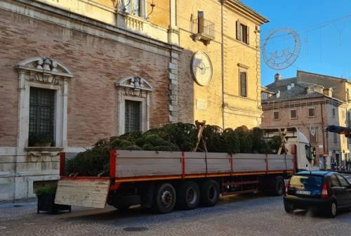 Osimo, è arrivato l'albero di Natale da Cortina