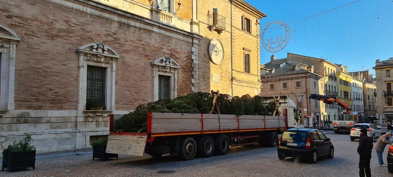 L'arrivo dell'albero