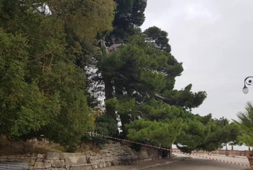 Osimo, il Comune al lavoro per la tutela del patrimonio arboreo