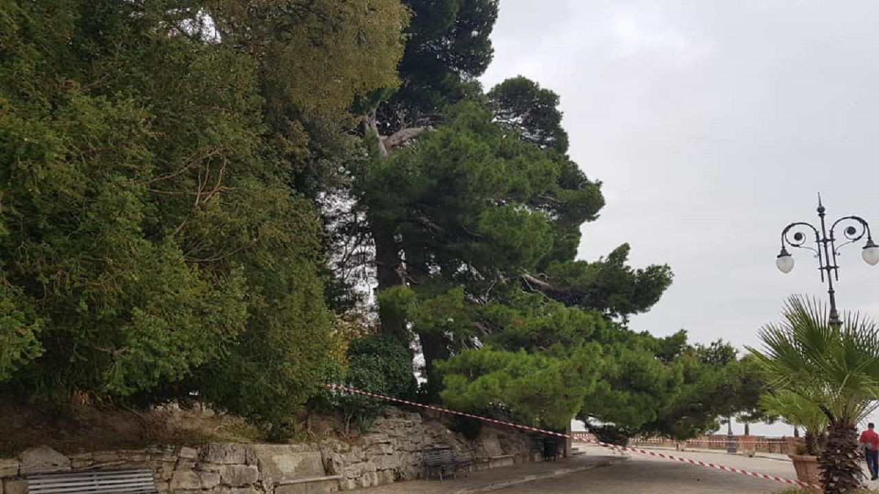 L'albero di piazza Nuova a Osimo