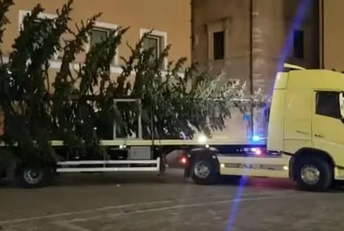 Fano, è arrivato l'albero di Natale ma scattano già le polemiche – VIDEO