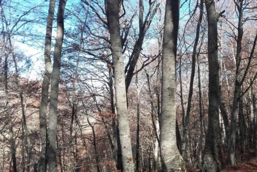 Prevenzione, biodiversità e bioeconomia circolare delle foreste: il punto con Legambiente Marche