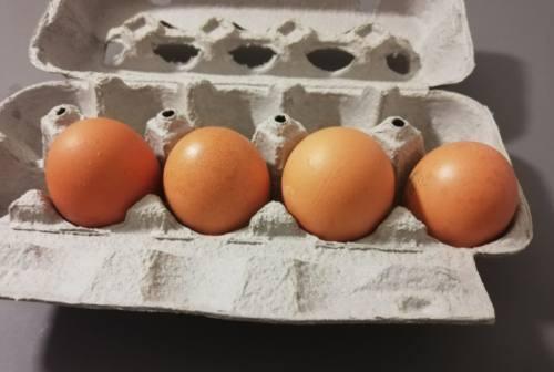 Fipronil in uova e frittate, a processo imprenditore jesino 65enne