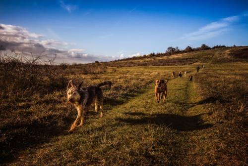 Falconara, la gestione del canile diventa un'occasione di inclusione sociale