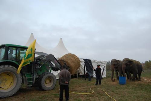 Fabriano: commercianti, Caritas, Consorzio agrario, tutti in aiuto del circo rimasto bloccato in città