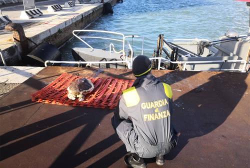 Porto di Ancona, trovata carcassa di tartaruga