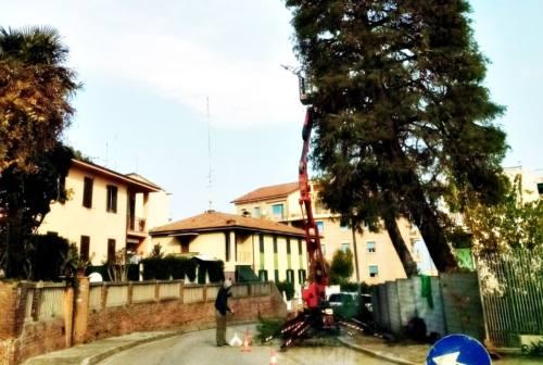 Ancona, al via lavori nei parchi tra potature e nuove staccionate
