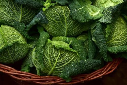 Cavolfiore verde di Macerata, la varietà autoctona marchigiana ricca di nutrienti