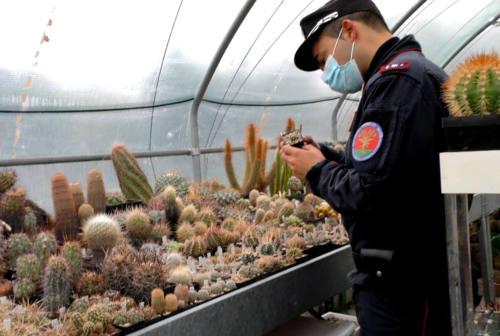 Traffico illecito internazionale di piante rare e cactus dall'America: anche un senigalliese coinvolto
