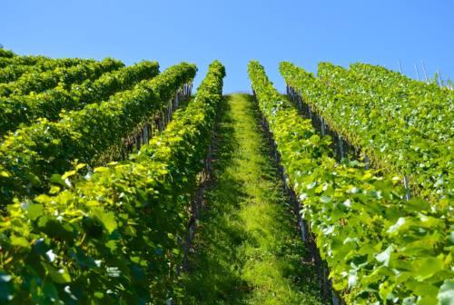 Agricoltura, la Cia di Ascoli: «La Regione acceleri sul Piano di sviluppo rurale»