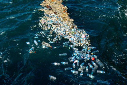 No al polistirolo nel settore ittico, dalla Regione incentivi per contenitori in plastica riutilizzabile