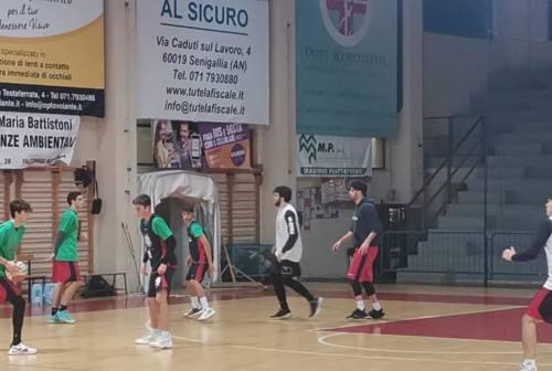 Goldengas Senigallia a Cesena, Pierantoni: «Amichevole utile per mantenere il ritmo gara»