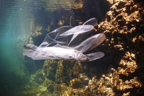 I danni della plastica in mare, gli esperti del CNR rispondono alle domande