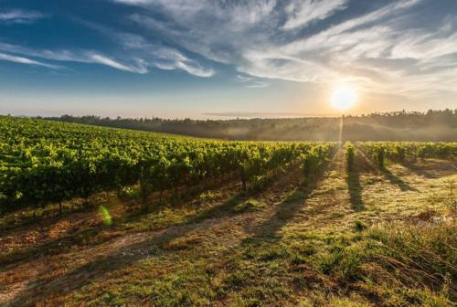 """Almanacco di vino e olio, """"Le Marche nel bicchiere 2021"""". Carloni: «Fieri delle nostre eccellenze»"""