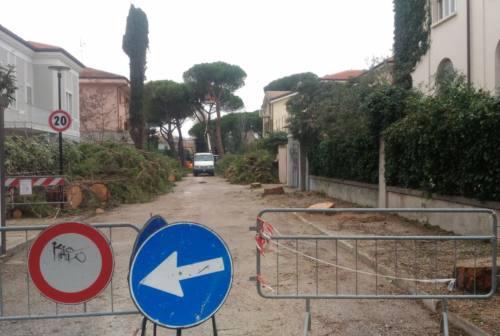 Senigallia, taglio degli alberi… senza proteste