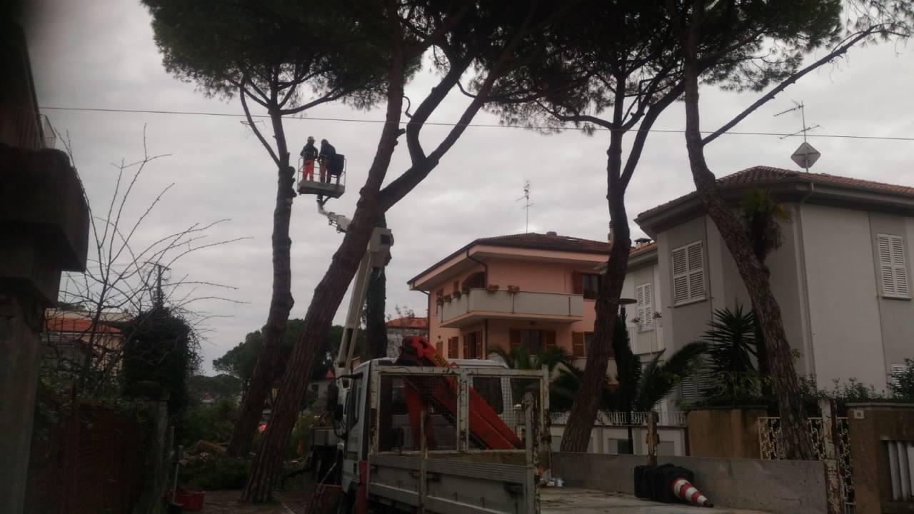 L'intervento per abbattere gli alberi in via don Minzoni a Senigallia
