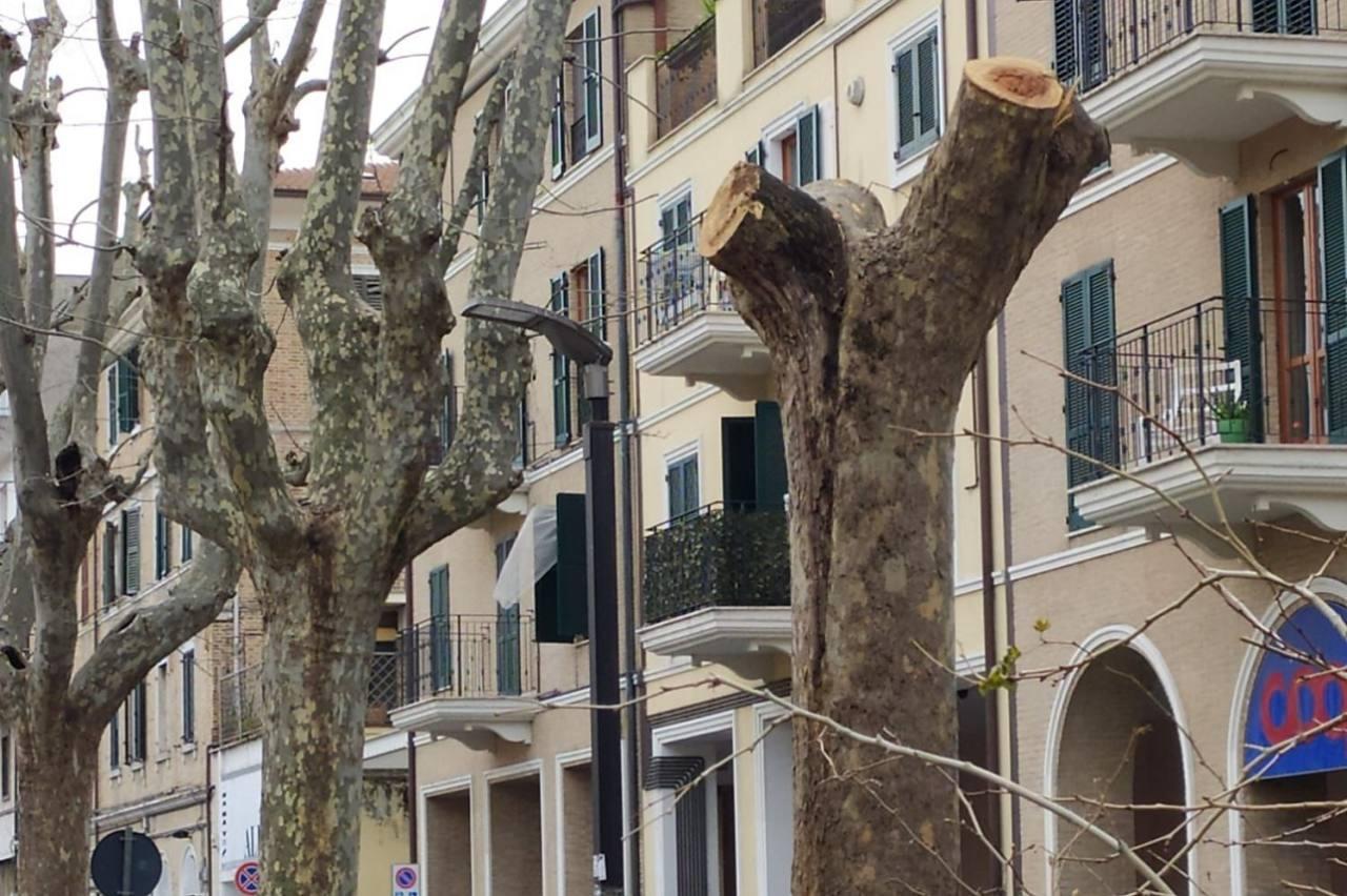 Albero Corso Carlo Alberto