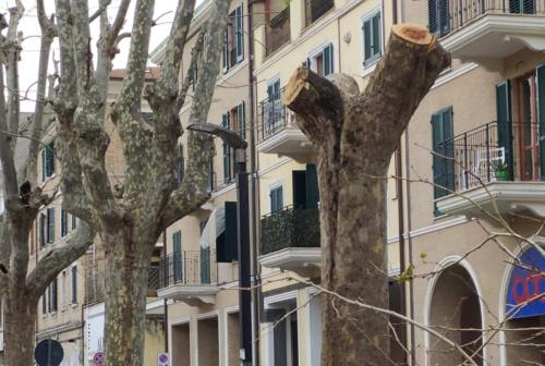 Ancona, prosegue la potatura di alberi: botta e risposta tra l'assessore Foresi e Boni del Ctp 3