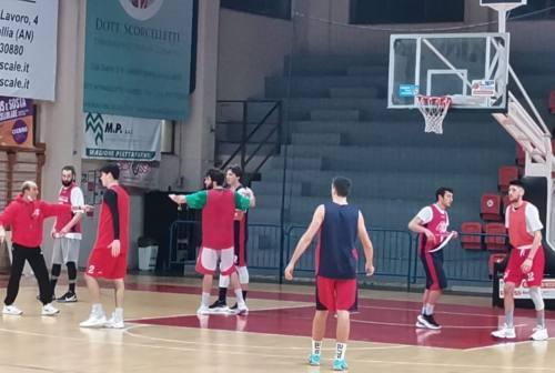 Basket, Goldengas non fermarti: domani arriva Cividale a Senigallia