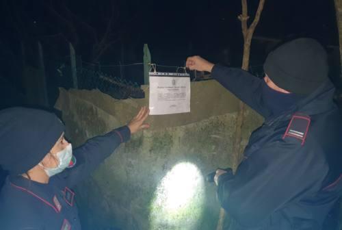 Suini sequestrati a Fiuminata, l'associazione Vitadacani ne chiede l'affidamento
