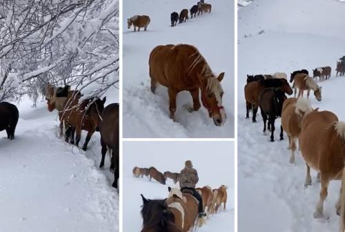 La spettacolare transumanza nella neve dei cavalli del Sibillini Ranch