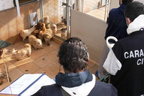 Emergenza crocchette all'allevamento di Trecastelli: Amici Animali lancia la raccolta fondi