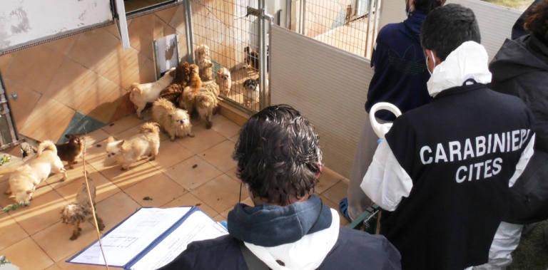 Sequestro all'allevamento di Trecastelli degli 859 cani presenti