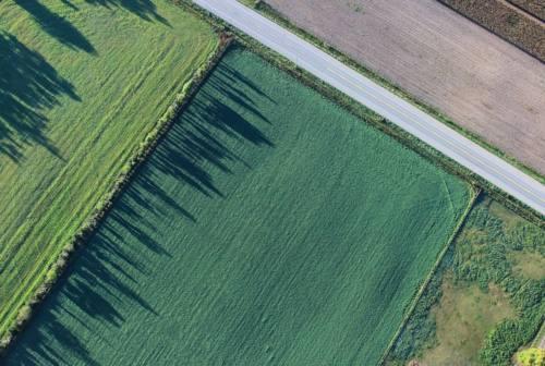 Cambiamento climatico e agricoltura: parola ai coltivatori diretti marchigiani