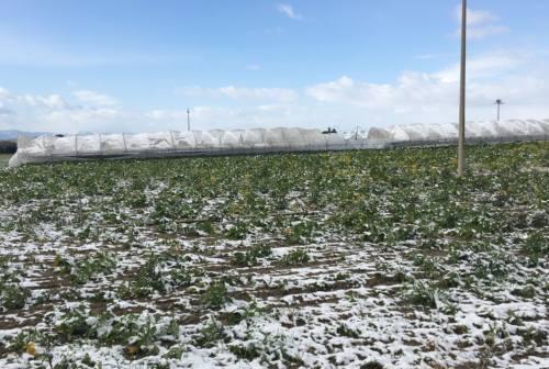Coldiretti Marche, Gardoni: «Burian non ha portato danni rilevanti alle campagne»