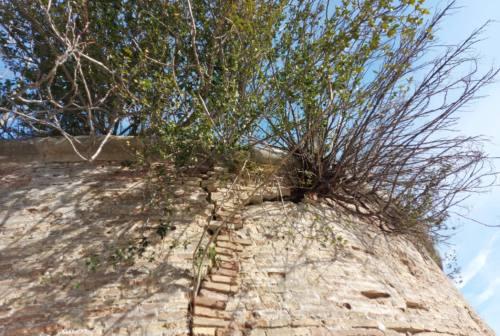 Ancona, l'attacco di Andreoli (Lega): «Scritte rosa e alberi sulle mura della Cittadella e del Forte Altavilla»