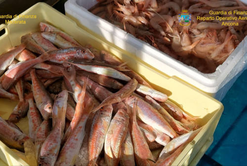 Civitanova, attività vende pesce senza autorizzazioni comunali: 2 persone denunciate
