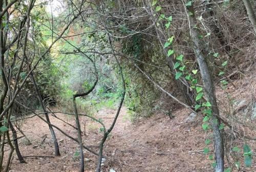 Ancona, nessun sentiero nell'ex mulattiera di Portonovo. Rubini critica la scelta