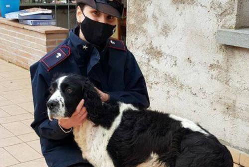 Fanese 52enne ruba un cane a Pennabilli: denunciata