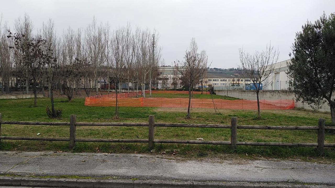 Delimitata un'area del Bosco di Topolino a Senigallia