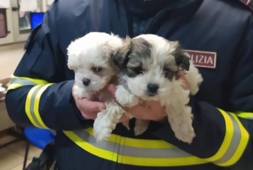 Cuccioli di cane nascosti in un camion in A14: salvati dalla Polstrada di Fano