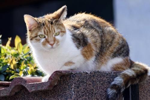 Matelica, una gatta si avvicina: lui la prende per la coda e la sbatte contro il muro