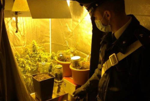 Gradara, una serra nel sottoscala e 500 grammi di marijuana: arrestato