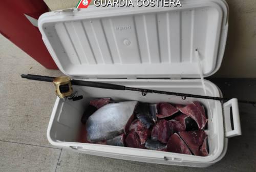 Pesaro, tonno rosso illegale: multa da 1300 euro ai pescatori