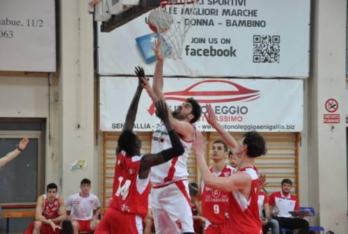 Basket, Goldengas Senigallia: ora c'è la sosta. Il 21 marzo inizia la fase due