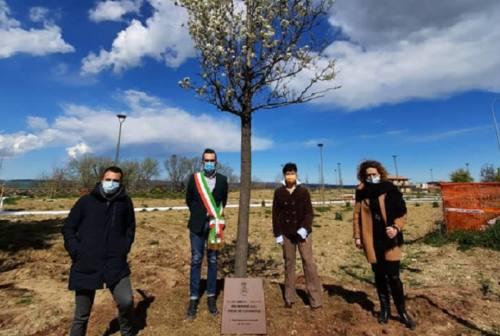 Monte San Giusto, un albero per commemorare le vittime del Covid