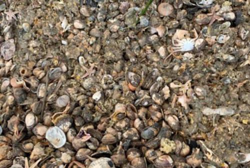 Dai rifiuti della pesca nuova vita per l'agricoltura. Ad Ancona un progetto pilota con l'UnivPm