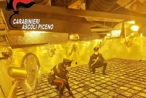 Piantagione indoor di marijuana scoperta dai Carabinieri di Ascoli: due arresti