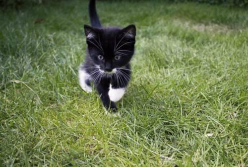 """C'è l'interesse pubblico, via ai manufatti per accogliere i gatti de """"La Colonia di Antonietta"""" a Jesi"""