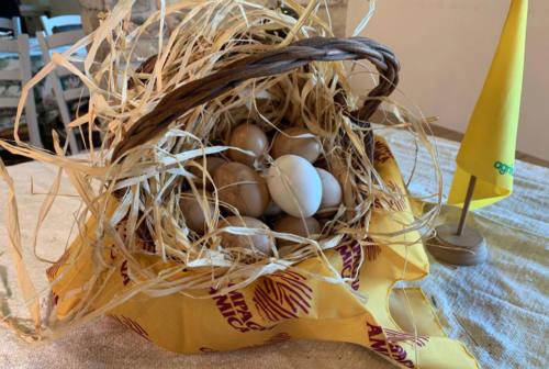 Marche, aumenta il consumo di uova: il 36% degli allevamenti è biologico